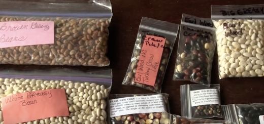 How to choose heirloom seeds